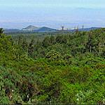 03Lemosho-glades